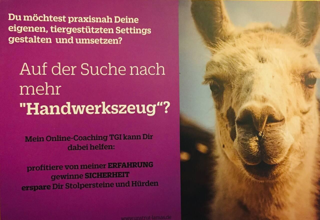tiergestütztes Coaching Business mit Lamas tiergestützte Therapie Online-Coaching