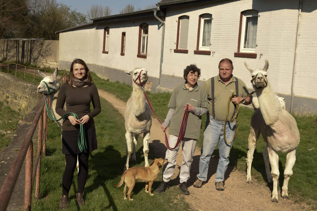 Lamas Menschen Brücke tiergestützte Therapie