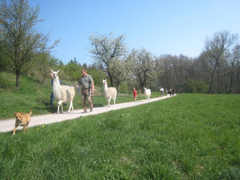 entspannt wandern mit Lamas