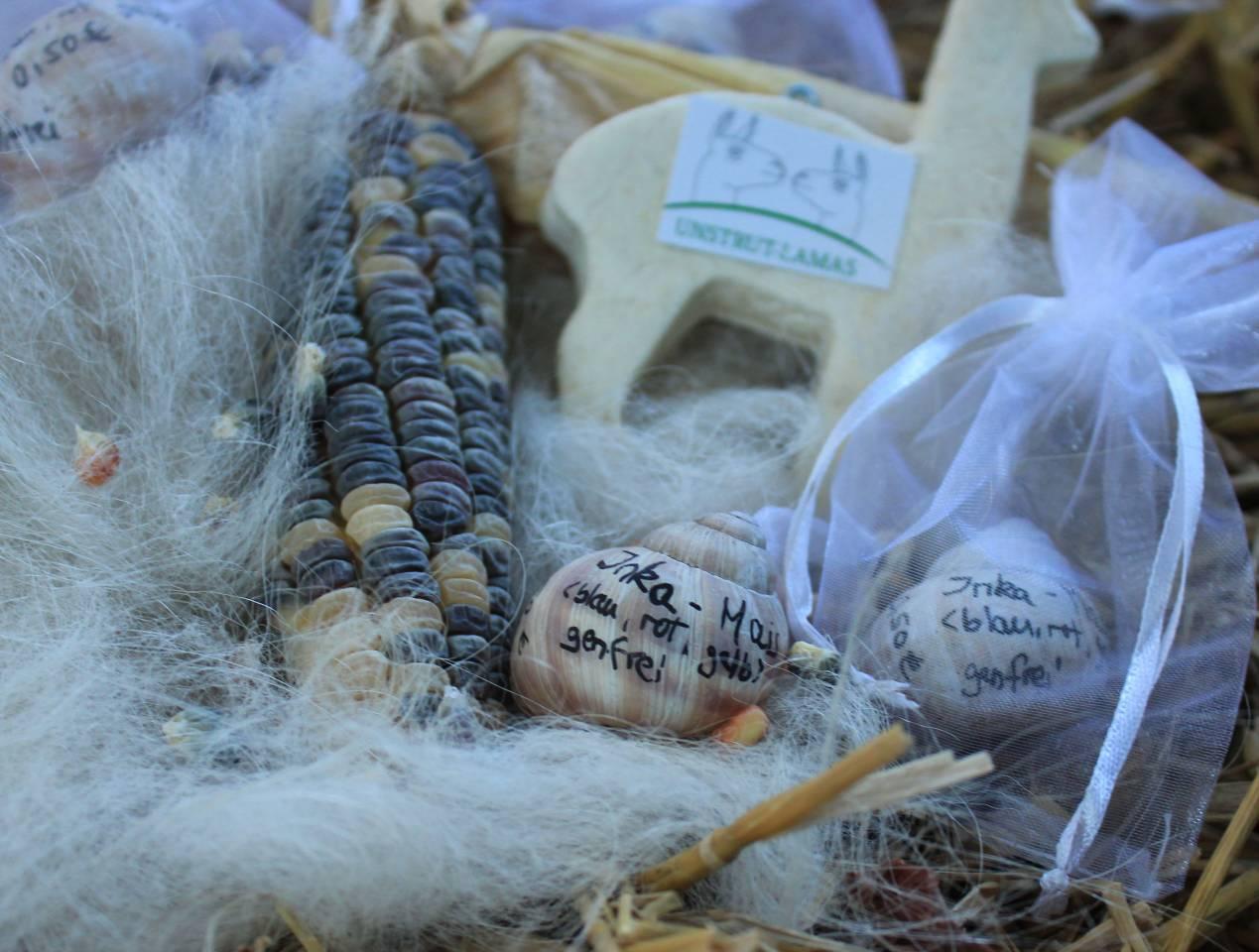 Inka-Mais, Maispflanze Inka