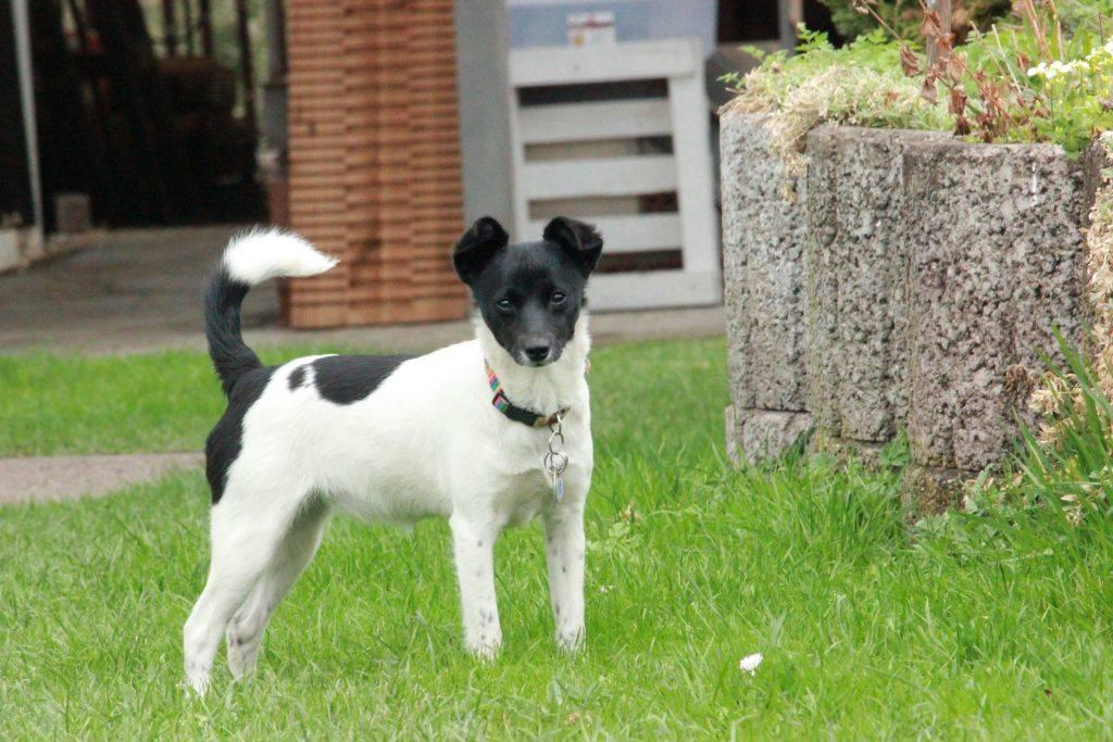 Therapie mit Hunden Therapiehund Tiergestützte Therapie