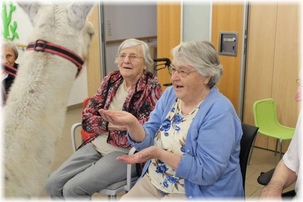 Therapie mit Lamas - Lamatherapie in Thüringen - Demenzbetreuung mit Lamas
