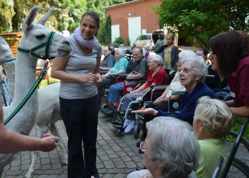 tiergestützte Therapie mit Lamas bei Demenzkranken