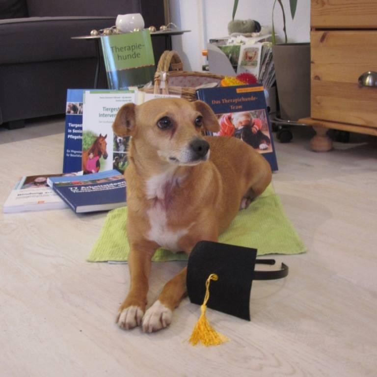 Therapiehund Asta, tiergestützte Therapie, Einsatz mit Hund