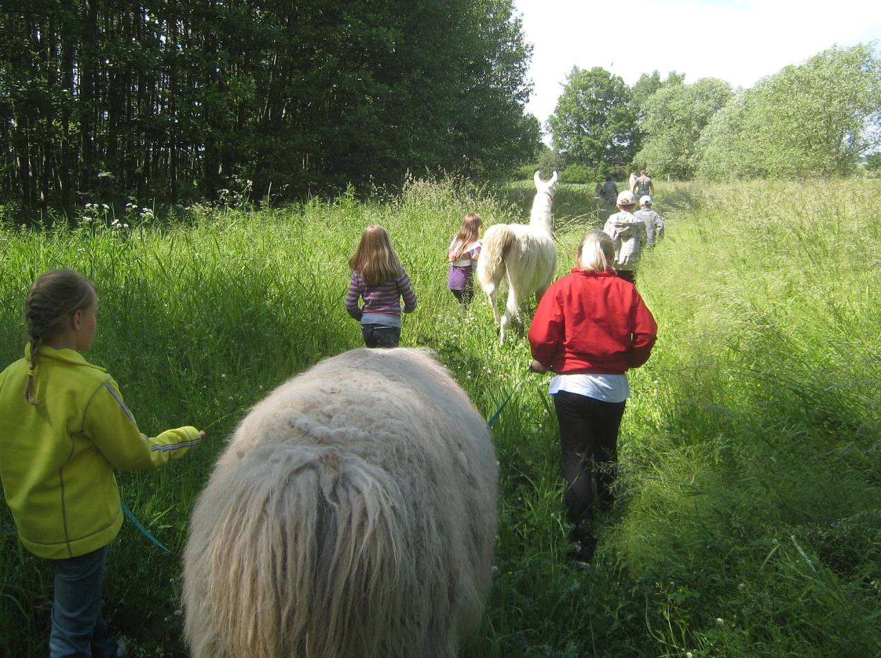 lama thüringen lamawanderung familienausflug tiergestützte therapie