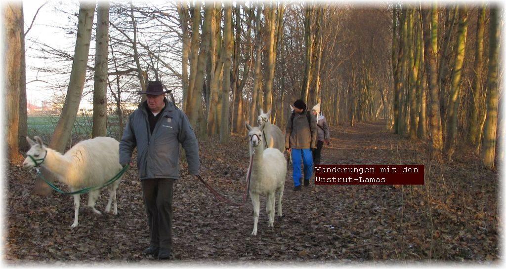 Wandern Wanderung mit Tieren Wandern mit Lamas tiergestützte Therapie mit Lamas, Lamatherapie, Hundetherapie, Thüringen
