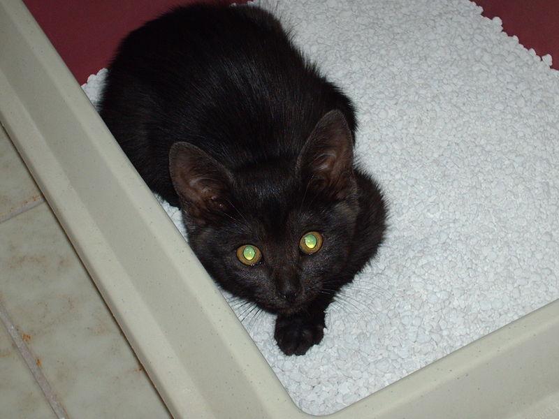 Nelly sitzt im Katzenklo 1.Tag bei uns