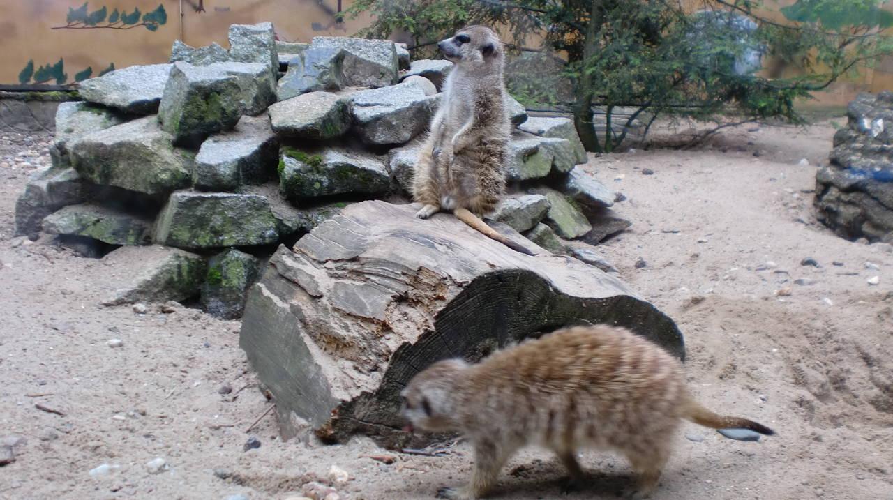 zu Besuch im Tierpark Germendorf