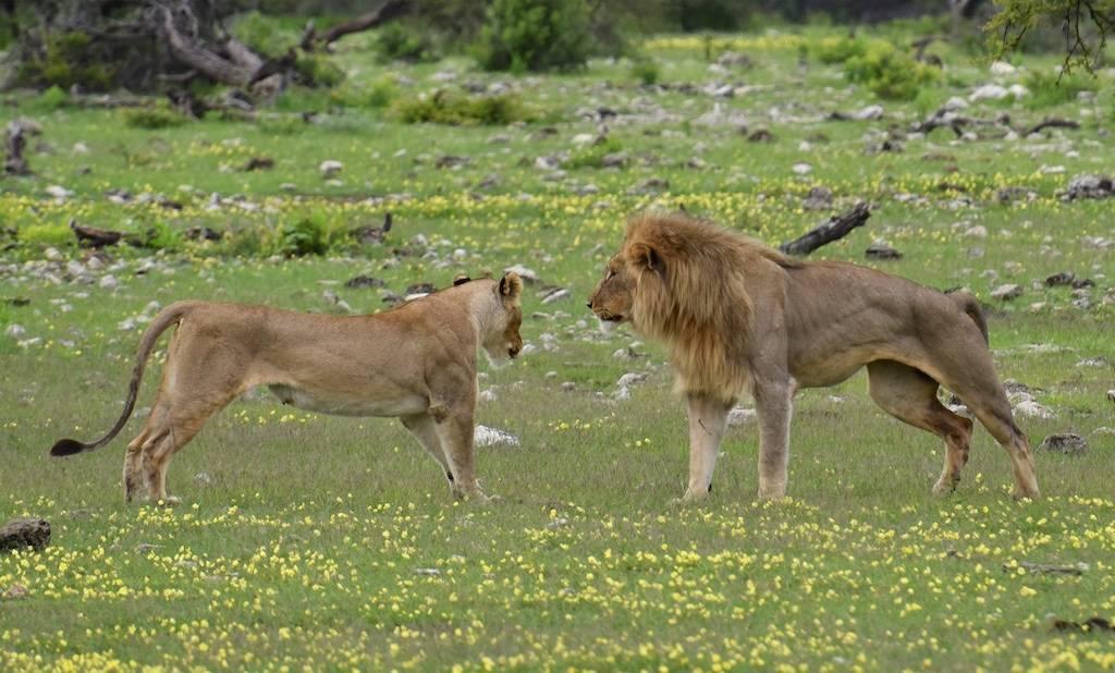 Flirten in afrika
