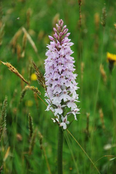 Lila Blumen Bestimmen | Möbelideen