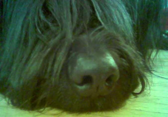 Schnüffel Nase