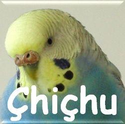 Chichu