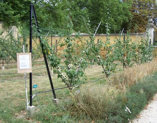 Jardin Noisette -- © 2009 by Janine Schreiber