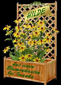 Blumenkasten von Iwanka