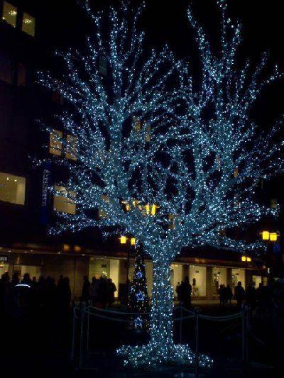 Illuminierter Baum vor Wolsdorff