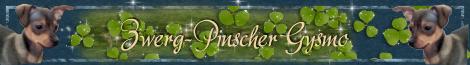 Banner Zwerpinscher Gysmo