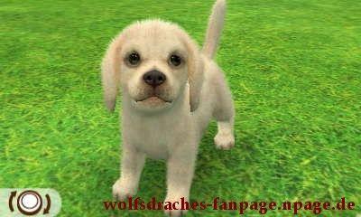 Beagle Weiß