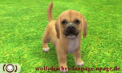 Beagle Doggefarben