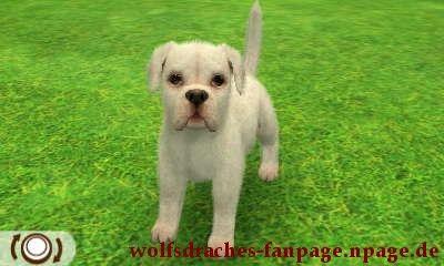 Boxer Weiß