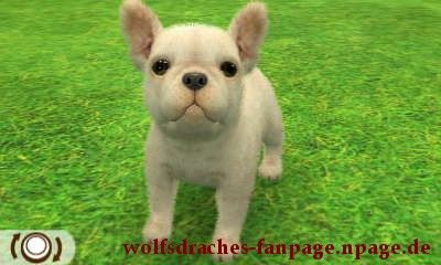 Bulldogge Weiß