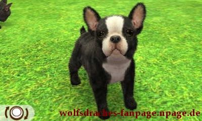 Bulldogge Gestromt