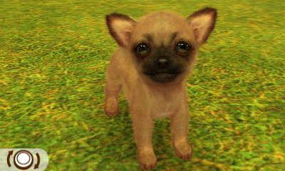 Chihuahua Mopsfarben