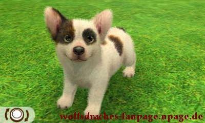 corgi bulldogge