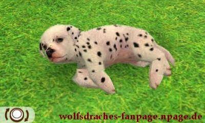 Dalmatiner Getupft