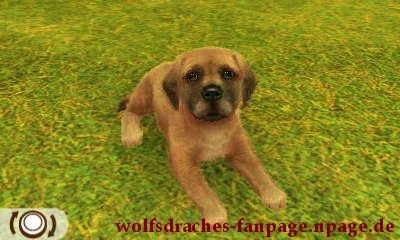 Dogge Gelb