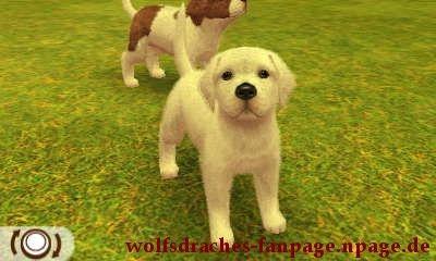 Dogge Weiß