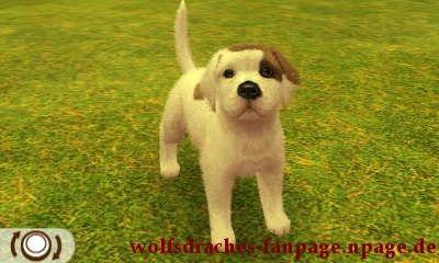 Dogge Bullterrierfarben