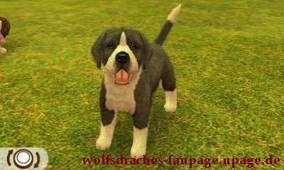 Dogge Schwarzer Mantel