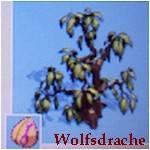pinata erdnussbaum