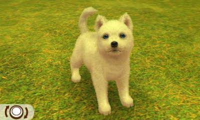 Husky Weiß