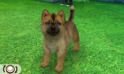 Husky Schäferhundfarben