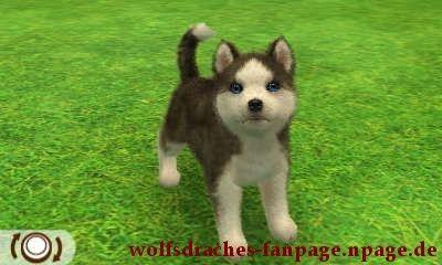 Husky Schwarz-Weiß