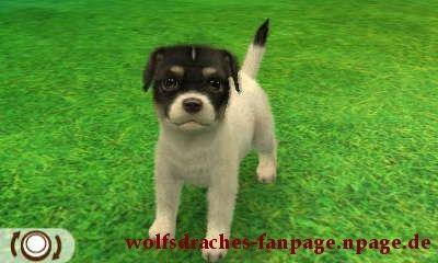 Jack Russell Schwarz-Weiß