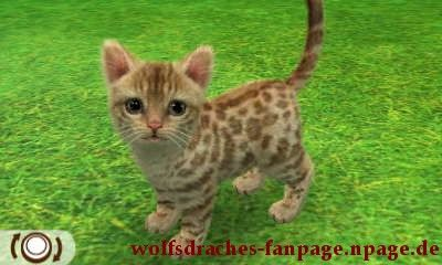 Hauskatze Leopard