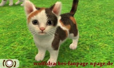 Hauskatze Schildpatt