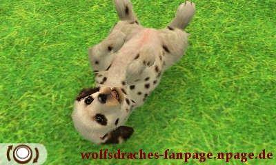 labrador dalmatiner