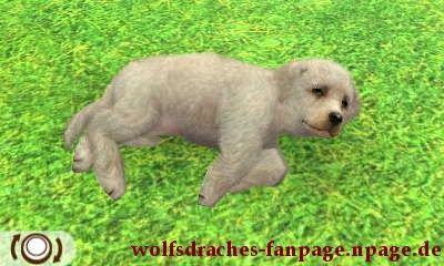 Labrador Grau