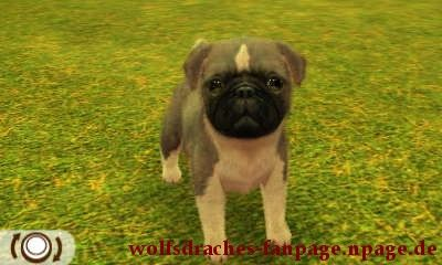 Mops Doggefarben