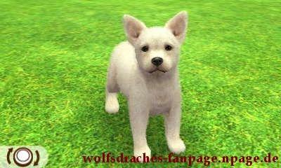 Schäferhund Weiß