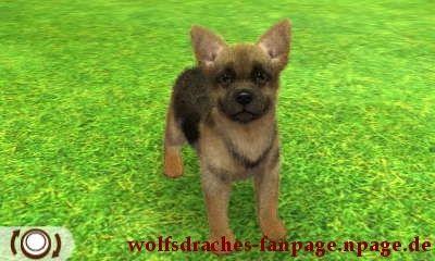 Schäferhund Schwarz-Braun
