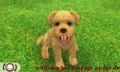 schnauzer blond