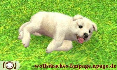 Sheltie Weiß