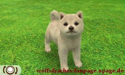 Shiba Wolfsfarben