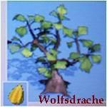 pinata stachelbeerstrauch