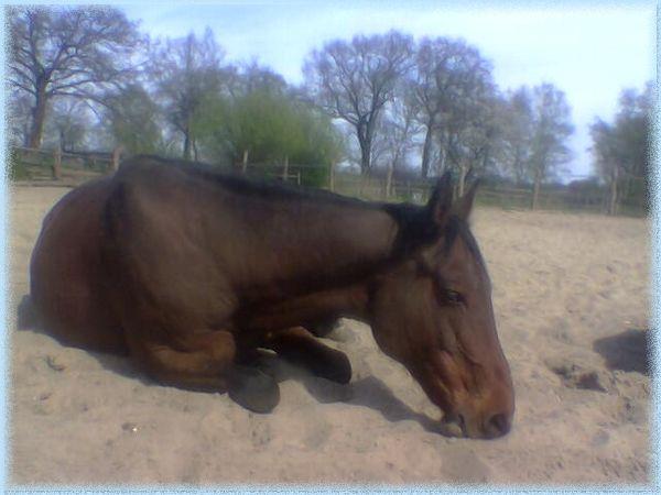 schlauch krebs pferd