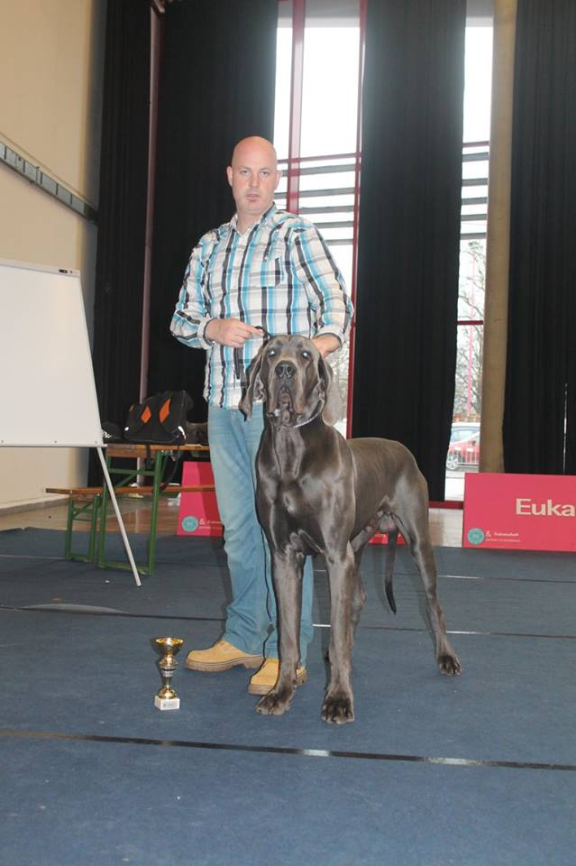 Austria Blue Dream Dogge blau